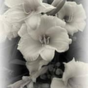 Daffodils Emerge Poster