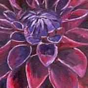 Dahlia - Closeup 3 Poster
