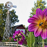 Dahlia Bee And Windmill Poster