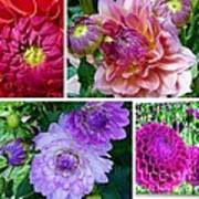 Dahlia Best Collage Poster