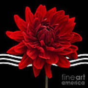 Dahlia Flower And Wavy Lines Triptych Canvas 2 - Red Poster by Natalie Kinnear