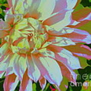 Dahlia In Pink And White Poster