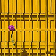 Dahlia In Yellow Gate Poster