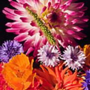Dahlia Zinnia Bachelor's Buttons Flowers Poster