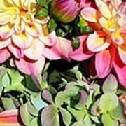 Dahlias And Hydrangeas Bouquet Poster