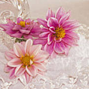 Dahlias And Lace Poster