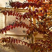 Dainty Branches - Warm Autumn Colors - Washington D C Facades Poster