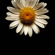 Daisies Are Not Flowers No Text Poster
