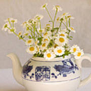 Daisies In A Teapot Poster