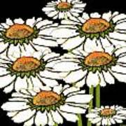 Daisies In The Dark Poster
