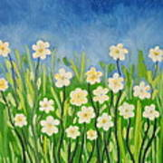 Daisies In The Spring Poster