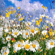Daisies On A Hill - Impressionism Poster