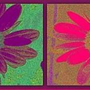 Daisies Purple Pink Poster