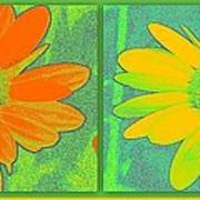 Daisy Collage Yellow Orange Poster