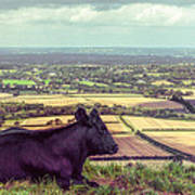 Daisy Enjoys The View From Truleigh Hill Poster
