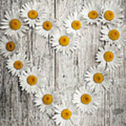 Daisy Heart On Old Wood Poster