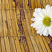 Daisy On Bamboo Poster