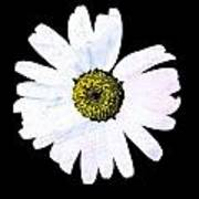 Daisy On Black Poster