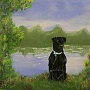 Daisy The Black Lab Poster