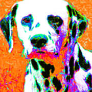 Dalmation Dog 20130125v2 Poster by Wingsdomain Art and Photography