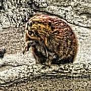 Dam Beaver Poster