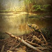 Dam Beavers Poster