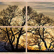 Dancing Forest Trees Picture Window Frame Photo Art View Poster