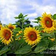 Dancing Sunflowers Poster