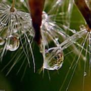 Dandelion Droplets Poster
