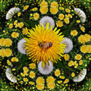 Dandelion Grove Mandala Poster