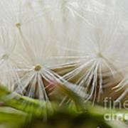 Dandelion Seed Head Macro IIi Poster