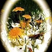 Dandelion Time Poster