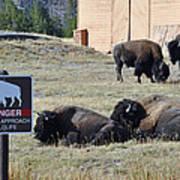 Danger Do Not Approach Wildlife Poster