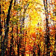 Dappled Sunlight Poster