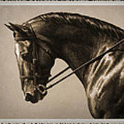 Dark Dressage Horse Old Photo Fx Poster by Crista Forest