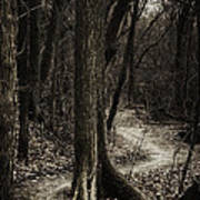 Dark Winding Path Poster