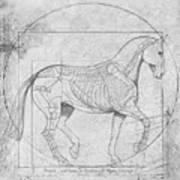 Da Vinci Horse Piaffe Grayscale Poster