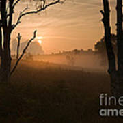 Cannock Chase Dawn Mist Poster