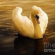 Dawn Swan Poster
