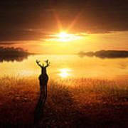Dawn's Golden Light Poster