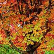 Day Glo Autumn Poster