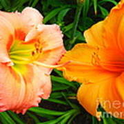 Day Lilies As Happy Friends Poster