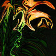 Day Lily At Night Poster