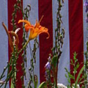 Daylily And Old Glory Poster