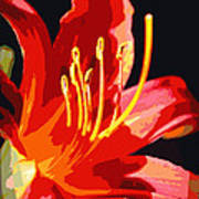 Daylily Flame Poster