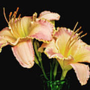 Daylily Pair Poster