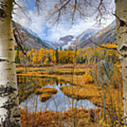 Dazzling Fall Foliage Poster by Mark Whitt