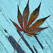Dazzling Japanese Maple Leaf Poster