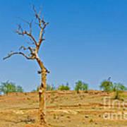 Dead Single Tree Poster