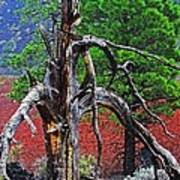 Dead Tree On Cinder At Sunset Crater Poster